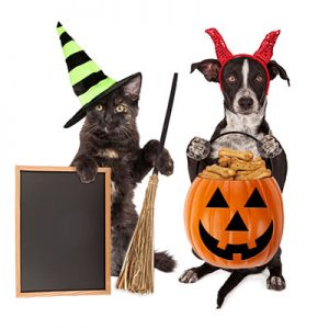 Homemade Halloween Pet Treat Recipes For Dogs & Cats