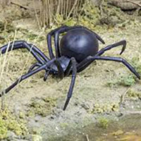 Shop Now For Large Outdoor Spider Decorations