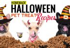 Cats and dogs love these homemade Halloween pet treat recipes.