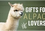 Lots Of Awesome Cute & Unique Gifts And Gift Ideas For Alpaca Lovers, Owners, And Farmers