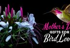 Fun Mother's Day Gifts And Gift Ideas For Bird Lovers And Backyard Bird Watchers.