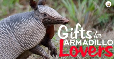 Awesome and unique armadillo gifts and gift ideas for armadillo lovers.