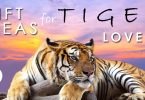 Cool tiger gifts and unique gifts and gift ideas for tiger lovers.