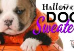 Adorable Halloween dog sweaters every puppy needs on fright night.